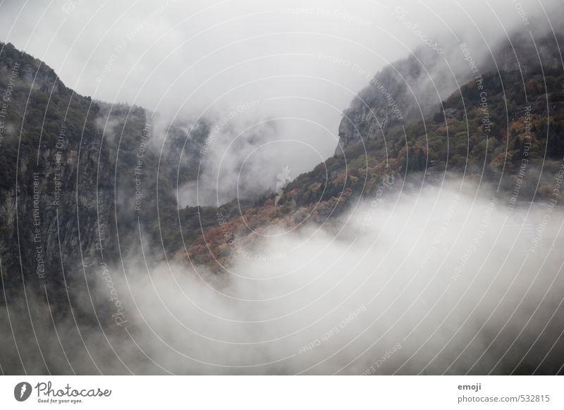 Nebelwald Umwelt Natur Landschaft Herbst schlechtes Wetter Wald Hügel Berge u. Gebirge außergewöhnlich bedrohlich dunkel natürlich grau Farbfoto Gedeckte Farben