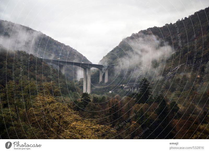 Schwaden Umwelt Natur Landschaft Herbst schlechtes Wetter Wald Brücke Bauwerk nachhaltig natürlich Farbfoto Gedeckte Farben Außenaufnahme Menschenleer Tag