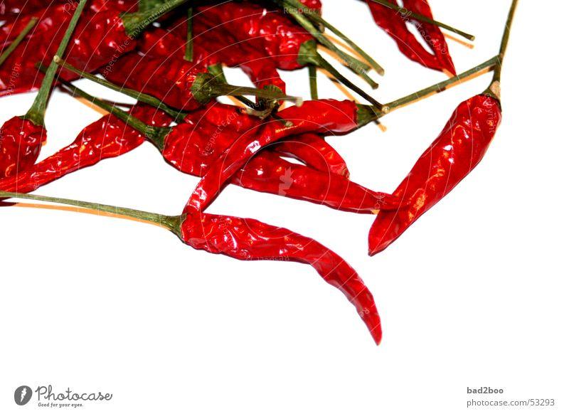 Chilischoten Kräuter & Gewürze feurig Schote rot Pflanze Ernährung Lebensmittel Scharfer Geschmack würzig brennen hitzig pepper genießen beißen spicy sharpness