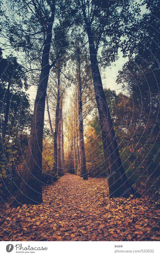Naturbasis Umwelt Landschaft Pflanze Urelemente Erde Herbst Klima Wetter Baum Blatt Park Wald Wege & Pfade groß hoch natürlich Idylle Wachstum Ziel herbstlich