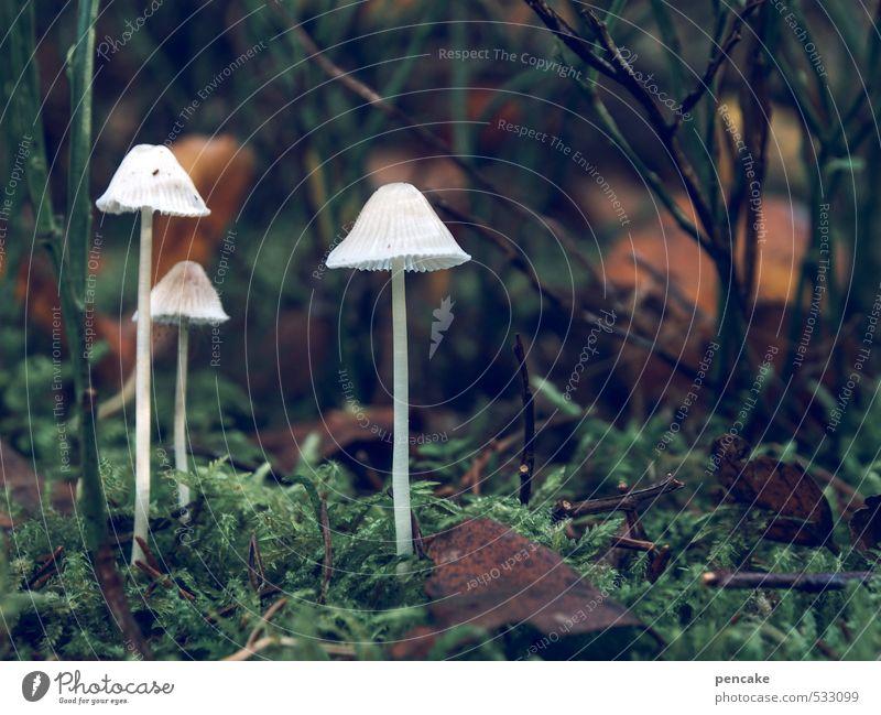 sonntagsspaziergang Natur weiß Landschaft Wald dunkel Herbst träumen Erde leuchten Wachstum wandern ästhetisch Urelemente Freundlichkeit Zeichen Moos