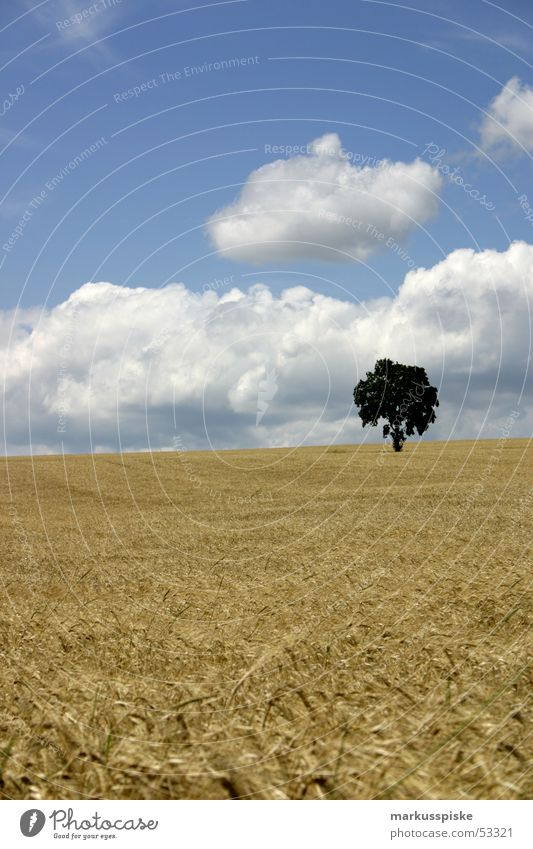 idylle ? Himmel Baum Sonne Sommer Wolken Feld Getreide Landwirtschaft Ernte Korn Weizen Roggen Hafer