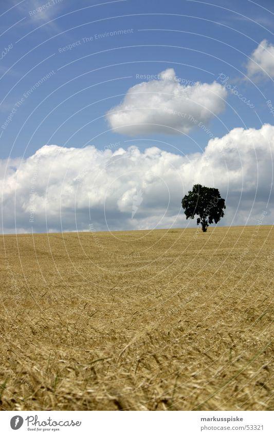 idylle ? Wolken Baum Feld Weizen Hafer Roggen Landwirtschaft Sommer Himmel Ernte Sonne Getreide Korn