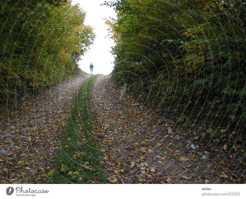 Weg ins Licht Wald Baum Blatt Herbst Gras Wiese Forstweg Fußweg Spaziergang gehen Wege & Pfade Mensch Spuren Ast oben