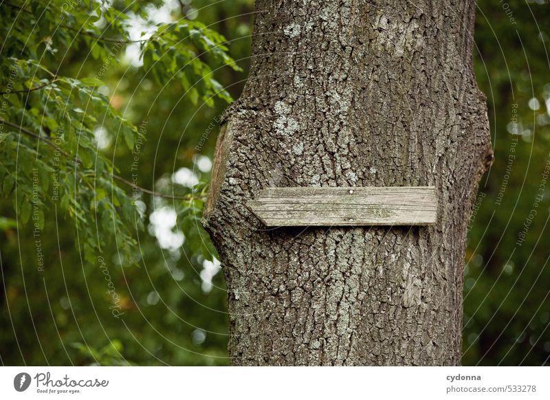 Wird schon richtig sein ... Natur Ferien & Urlaub & Reisen Sommer Baum Wald Umwelt Wege & Pfade Schilder & Markierungen wandern Ausflug Hinweisschild Beginn Kommunizieren Abenteuer Hilfsbereitschaft planen