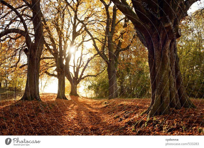 Herbst harmonisch Erholung ruhig Ausflug Ferne wandern Umwelt Natur Landschaft Sonnenlicht Schönes Wetter Baum Wald Wege & Pfade einzigartig erleben Erwartung
