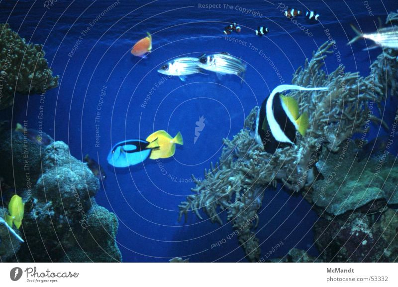 Meeresfische Wasser Meer blau Farbe Fisch USA Aquarium Kalifornien Monterey