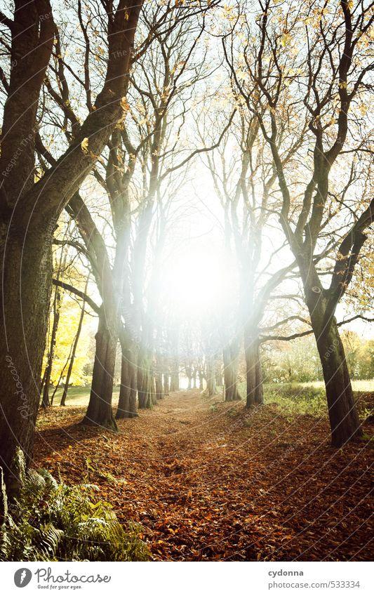 Zielführend Natur Baum Erholung Landschaft ruhig Wald Umwelt Leben Herbst Wege & Pfade Freiheit Religion & Glaube träumen Kraft Idylle wandern