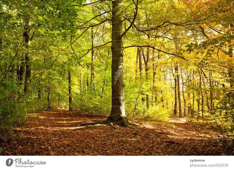 Übergang Gesundheit harmonisch Erholung ruhig Ausflug Freiheit wandern Umwelt Natur Landschaft Herbst Schönes Wetter Baum Wald Beginn einzigartig erleben