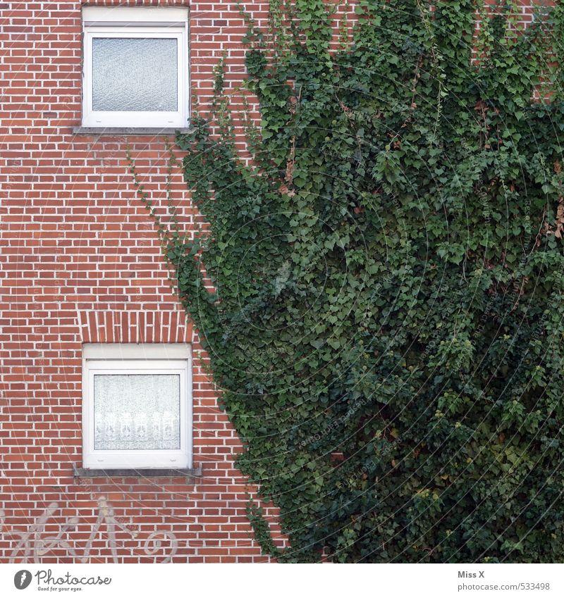 Wucher Pflanze Haus Fenster Wand Mauer Fassade Wohnung Häusliches Leben Wachstum Efeu Ranke bewachsen Backsteinfassade