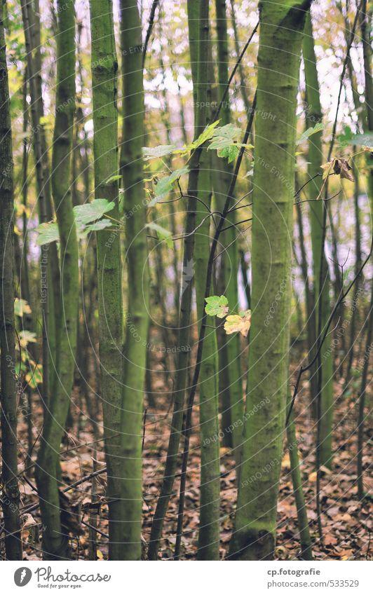 Den Wald vor lauter Bäumen... Natur Pflanze Herbst Baum kalt trist braun Außenaufnahme Schwache Tiefenschärfe