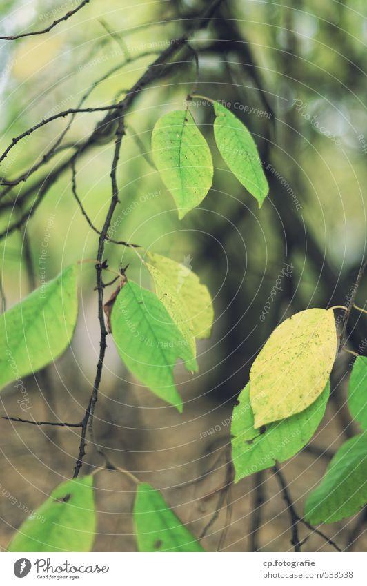 Blattwerk grün Pflanze Baum Wald Herbst natürlich Garten Grünpflanze