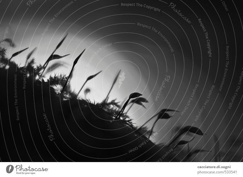 Nachtwanderung Natur Pflanze Einsamkeit ruhig schwarz dunkel Herbst lustig grau klein außergewöhnlich Zusammensein Tourismus Schönes Wetter Spitze einfach