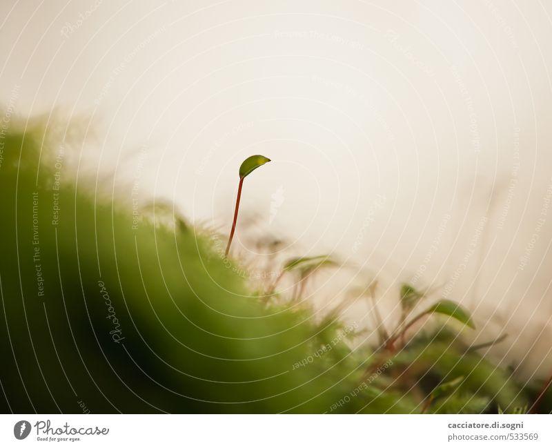 Der Aufpasser Natur Pflanze Herbst Schönes Wetter Moos Blüte außergewöhnlich einfach exotisch Freundlichkeit klein Neugier niedlich grün Lebensfreude Coolness
