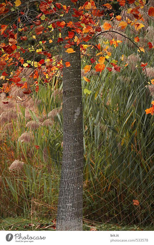 Die Bunten kommen nach unten Umwelt Natur Pflanze Herbst Klima Schönes Wetter Wind Grünpflanze Garten Park fallen dehydrieren schön mehrfarbig grün Stimmung