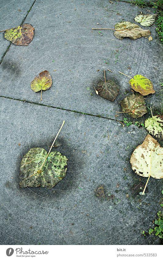 Herbtsnässe Herbst Klima schlechtes Wetter Nebel Regen liegen dehydrieren dunkel nass unten grau Herbstlaub herbstlich Blatt Herbstbeginn Herbstwetter