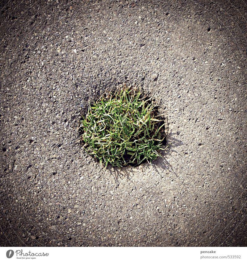 pflanze | und es ward grün Natur Urelemente Pflanze Gras Zeichen Abenteuer Beginn anstrengen Konzentration Ferne rebellieren sparsam Kraft Überleben Wachstum