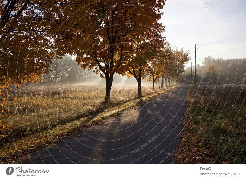Lichtstrahlen Landschaft Himmel Sonne Sonnenlicht Herbst Schönes Wetter Baum Straße Natur Stimmung Lichterscheinung Schatten Nebel Herbstfärbung Farbfoto