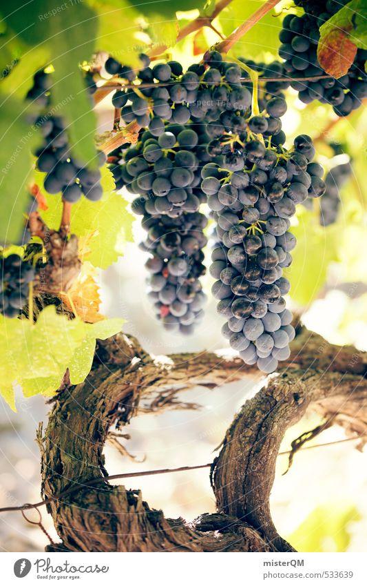 French Style XXXVII Kunst ästhetisch Zufriedenheit Wein Weinberg Weintrauben Weinbau Weinlese Weingut reif Frankreich Provence Farbfoto Gedeckte Farben