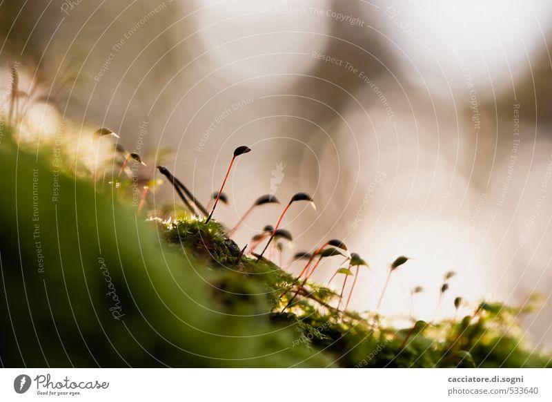 Im Abendlicht Pflanze grün ruhig Umwelt Blüte Herbst Wege & Pfade klein Freiheit braun träumen Idylle ästhetisch Lebensfreude einzigartig Schönes Wetter