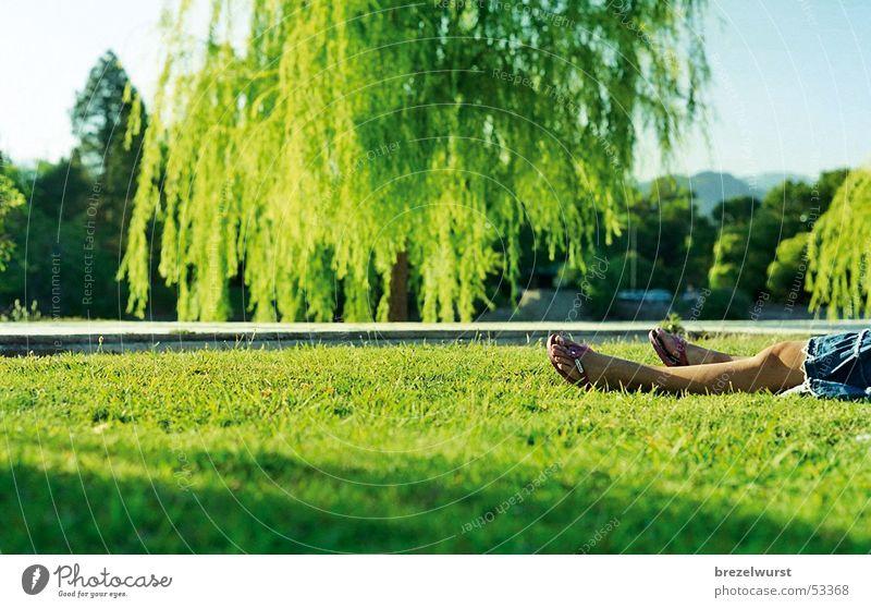 Flip-Flops im Park Sandale Flipflops Kleid Frau Sommer grün Trauerweide Sonnenuntergang Wiese Gras Argentinien Jeansrock Ferien & Urlaub & Reisen ruhig Erholung