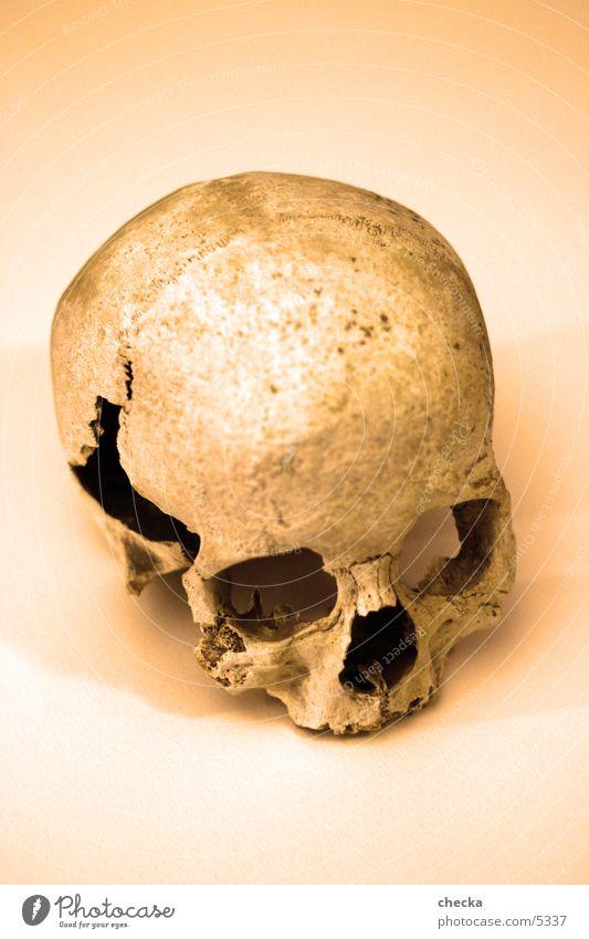 skull Tod obskur Skelett Schädel Gothic