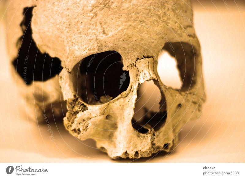 skull Skelett obskur Schädel Tod Morbid Gothic