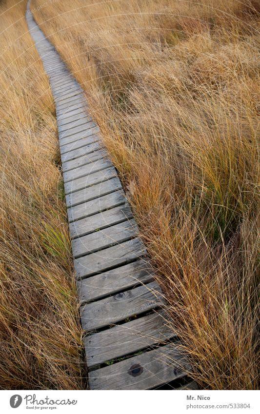 Der Rückweg Ferien & Urlaub & Reisen Ausflug Ferne wandern Umwelt Natur Landschaft Gras Sträucher Moor Sumpf Wege & Pfade ruhig Hohes Venn Steg vertrocknet