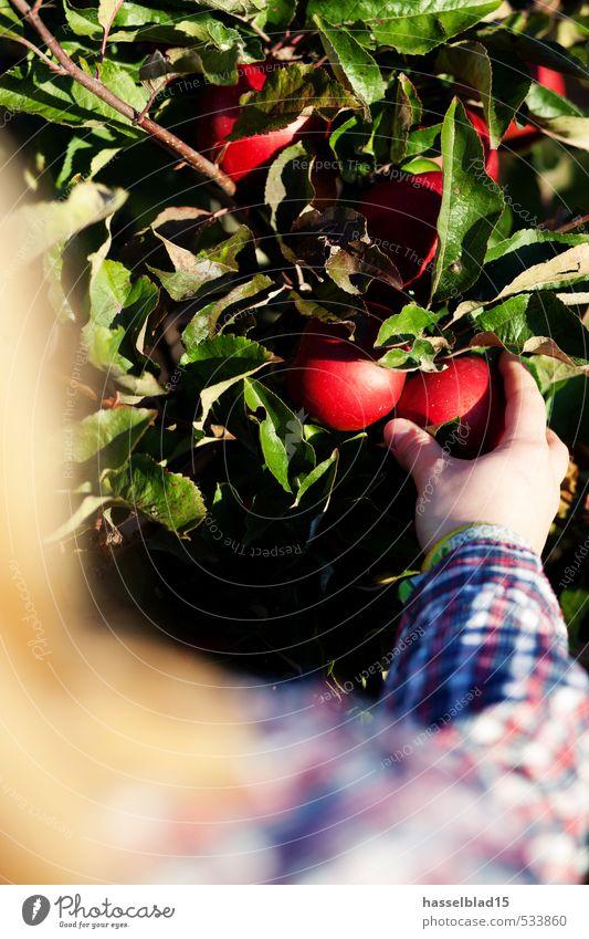 Erntefrisch rot-grün Mensch Sommer Baum Gesunde Ernährung Hand Freude Leben Essen Gesundheit Glück Frucht Arme Abenteuer lecker Bioprodukte Übergewicht