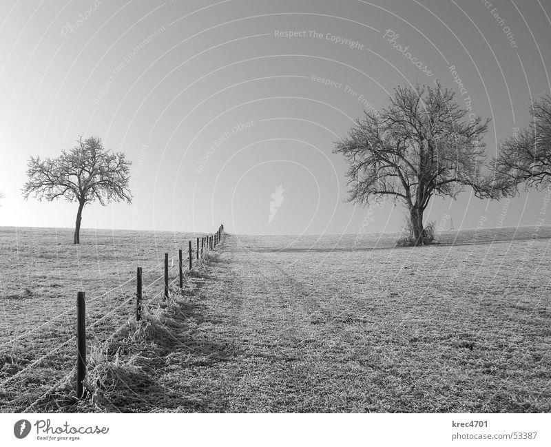 Auf beiden Seiten Baum Zaun Weidezaun Wiese Trennung Sonne Winter Schwarzweißfoto Raureif