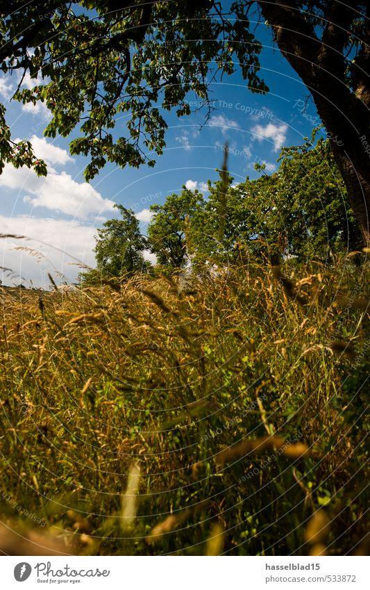 Sommersonnenwende Ferien & Urlaub & Reisen Erholung ruhig Gesunde Ernährung Wärme Wiese Gras Glück Zufriedenheit Tourismus Ausflug genießen Abenteuer Romantik