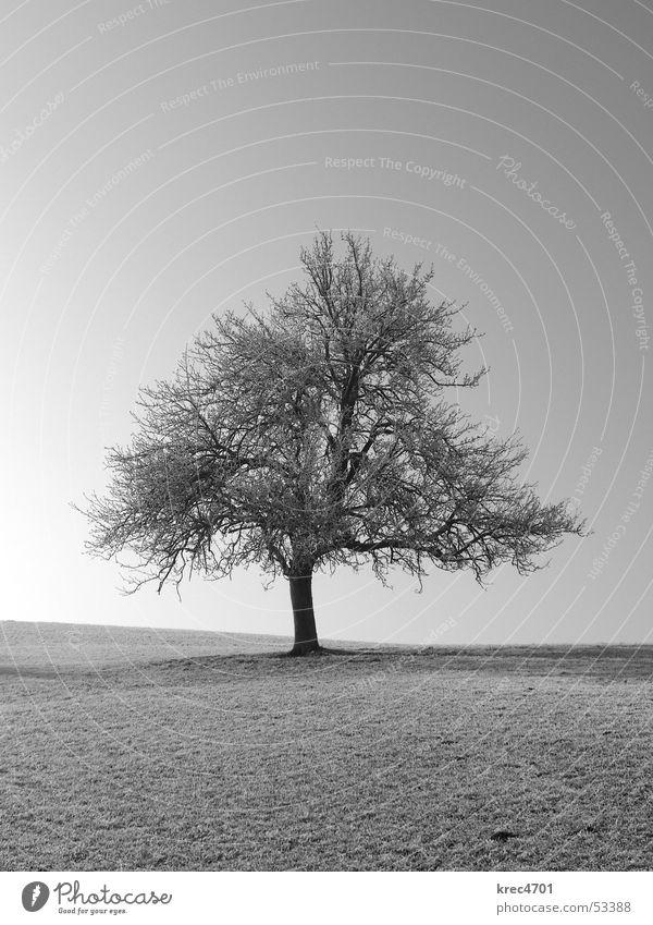 Ein Einzelner Baum Sonne Winter Einsamkeit Wiese Weide einzeln Raureif