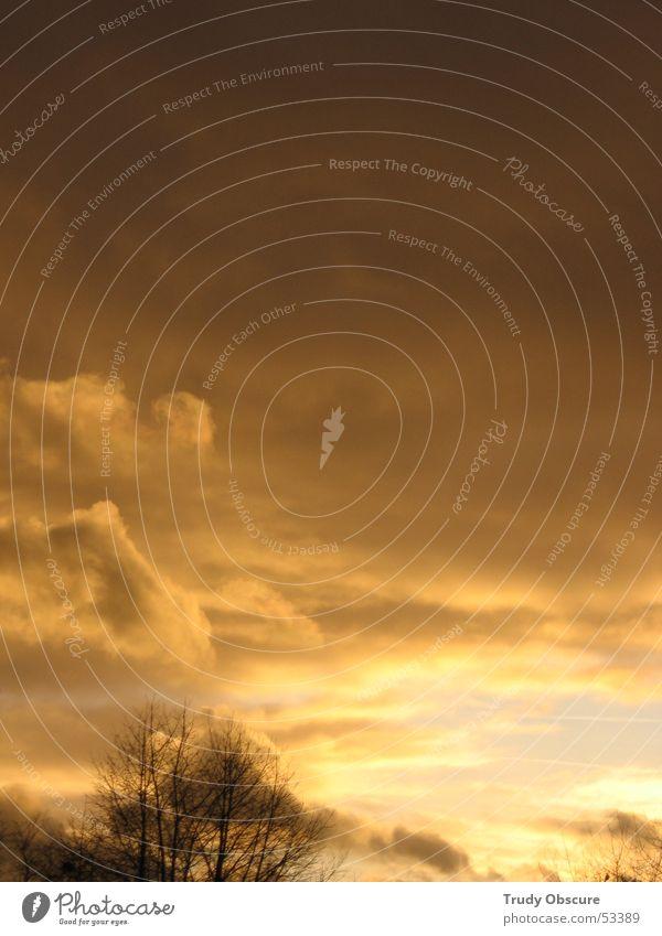 >100 Tage Sonnenschein im Jahr< Himmel Baum Winter Ferien & Urlaub & Reisen Wolken gelb dunkel hell braun Baumkrone Wolkendecke