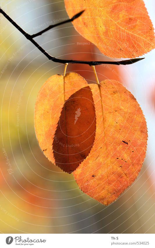 Herbst Natur schön Farbe Pflanze Freude Blatt Umwelt Leben natürlich Zufriedenheit ästhetisch Freundlichkeit Romantik harmonisch Interesse