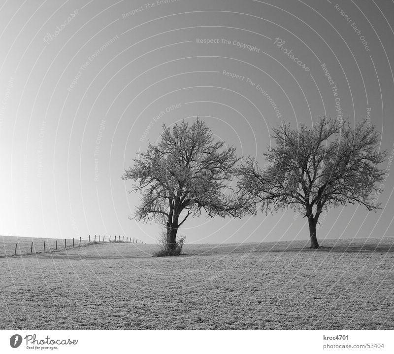 t(w)o - gether Baum Wiese Zaun Weidezaun Einsamkeit einzeln Schwarzweißfoto frei paarweise