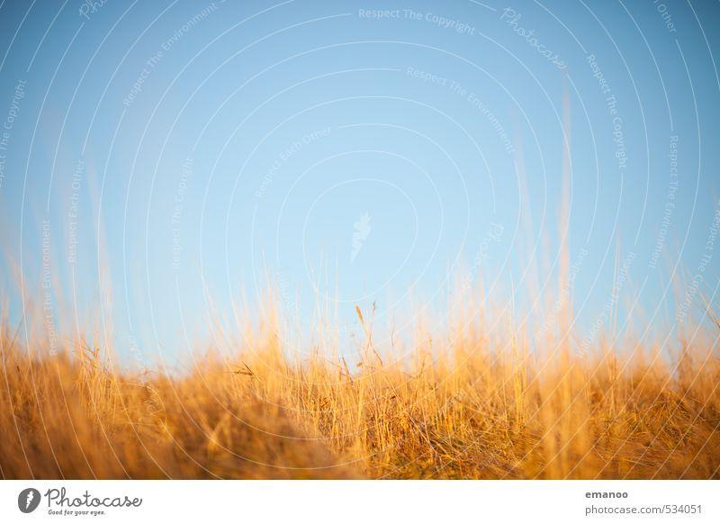 Herbstfarben Natur Landschaft Pflanze Luft Himmel Horizont Wetter Schönes Wetter Gras Wiese Wachstum weich blau braun gelb Hintergrundbild Halm herbstlich
