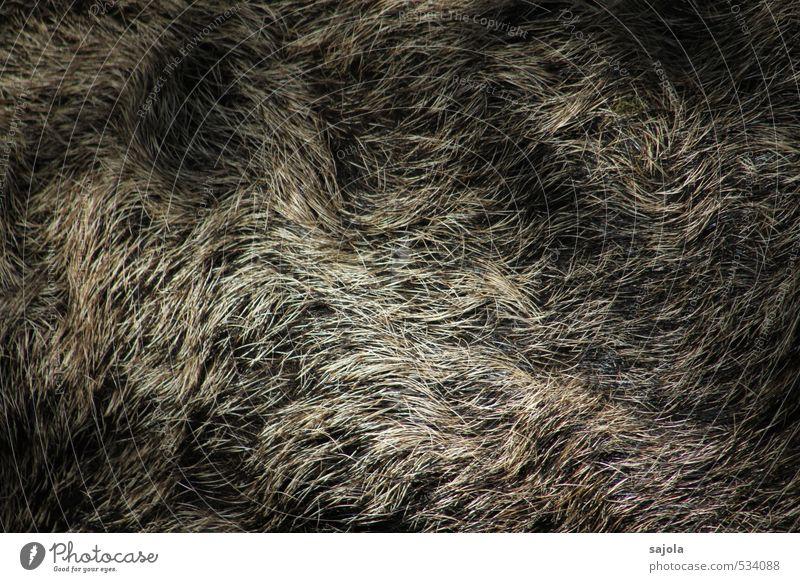 fell Tier Wildtier Fell Wildschwein 1 braun Beleuchtung borstig Behaarung wellig Fellfarbe Farbfoto Außenaufnahme Nahaufnahme Muster Strukturen & Formen Licht