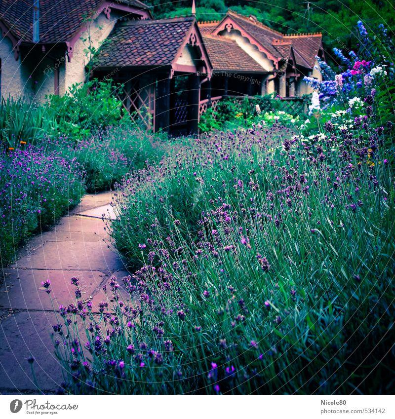 Lavendel in London Umwelt Park violett Hyde Park fernöstlich Romantik Garten Gartenhaus Gartenweg Beet verstecken vintage Farbfoto Außenaufnahme Menschenleer