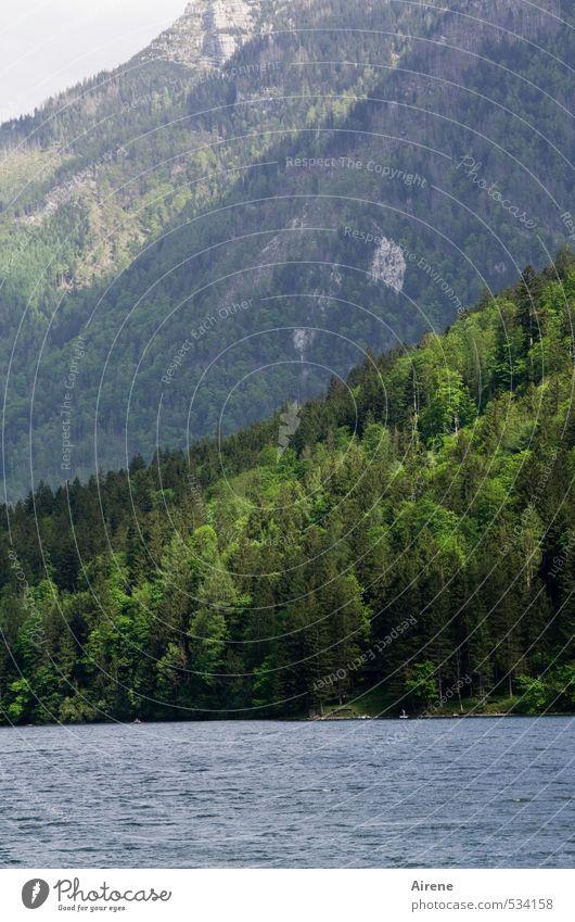 Berg.Wald.See. Natur Landschaft Urelemente Wasser Schönes Wetter Felsen Alpen Berge u. Gebirge Lunzer See Bergwald Gebirgssee natürlich blau grün Einsamkeit