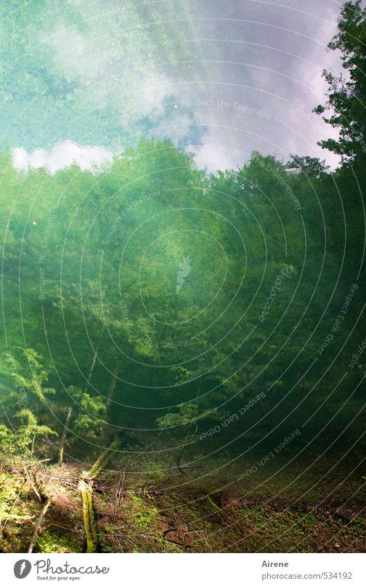 Wasser.Spiegel.Traumwelt. Himmel Natur blau grün Pflanze Baum Landschaft Wolken Wald See träumen Luft Schönes Wetter Urelemente Romantik