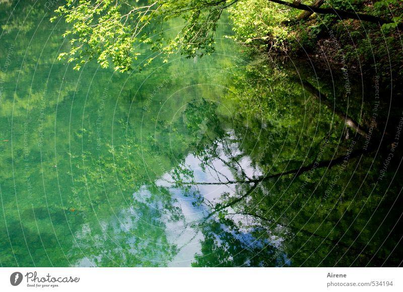 Sehnsuchtssee Himmel Natur blau grün Wasser Sommer Erholung Einsamkeit Landschaft ruhig Wald gelb See träumen Idylle Schönes Wetter