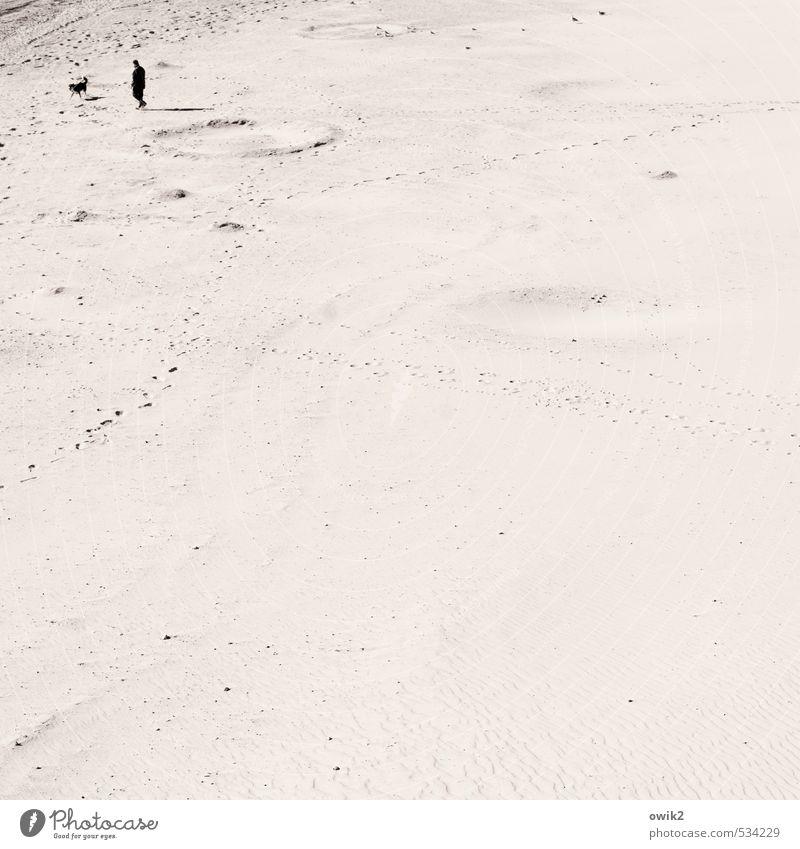 Gassi Mann Erwachsene 1 Mensch Umwelt Natur Landschaft Sand Klima Schönes Wetter Küste Strand Hund Tier gehen genießen groß Unendlichkeit hell Sympathie