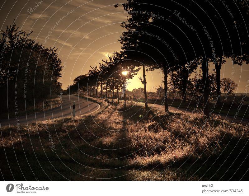 Nordkurve Umwelt Natur Landschaft Pflanze Himmel Wolken Horizont Herbst Klima Wetter Schönes Wetter Baum Gras Sträucher Straße Wege & Pfade Kurve leuchten