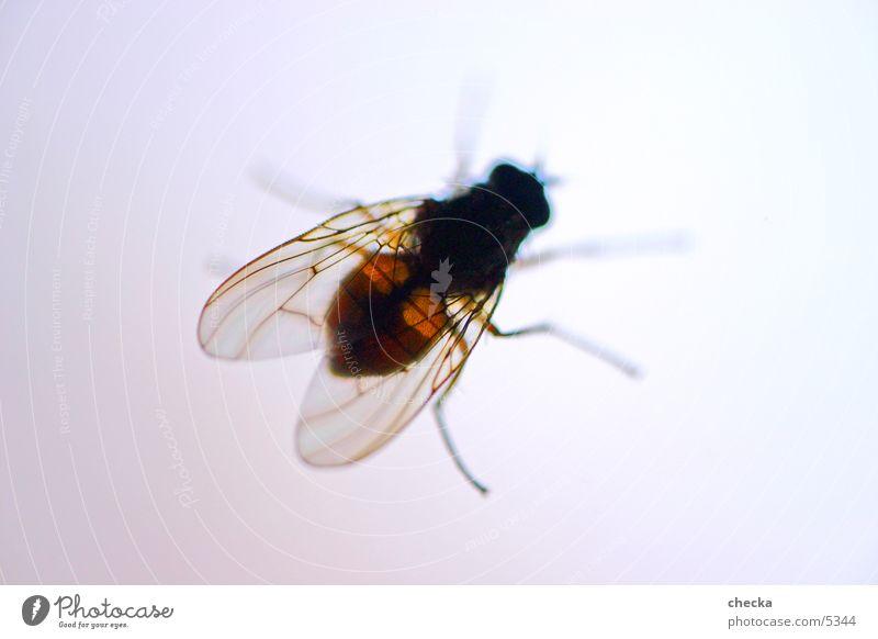 fly Verkehr Fliege fliegen Insekt Freiheit Idee fliegend Flügel Makroaufnahme