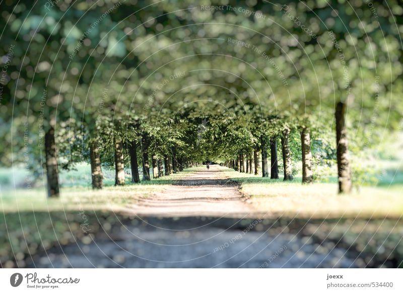 Und am Ende Natur schön grün Baum Wege & Pfade Schönes Wetter