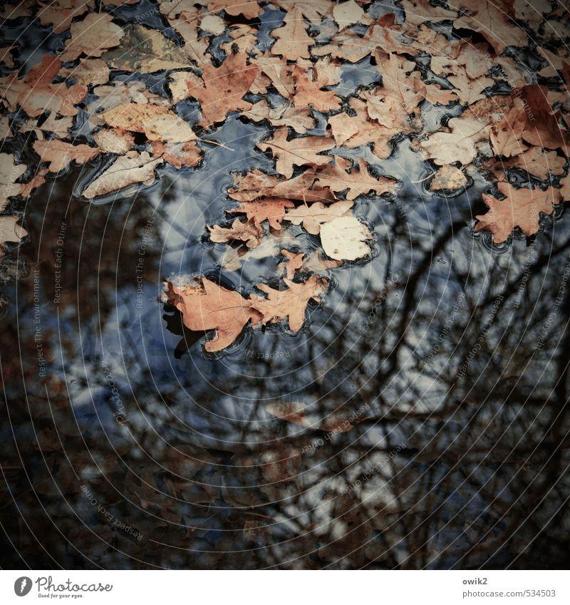 Demut Umwelt Natur Wasser Himmel Herbst Pflanze Blatt Eichenblatt Zweige u. Äste fallen Schwimmen & Baden dehydrieren dunkel frei Zusammensein nass trist