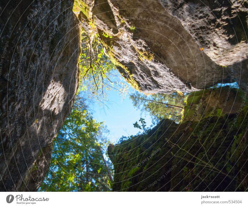ich liebe die Natur blau grün Sommer Baum ruhig Tier Wald Berge u. Gebirge Wärme natürlich Stimmung oben Felsen leuchten Idylle Perspektive