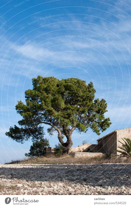 Meerblick ist aus Himmel Natur Ferien & Urlaub & Reisen blau grün Baum Einsamkeit ruhig Wärme Gebäude Schönes Wetter ästhetisch Mallorca mediterran Ruine Ferienhaus