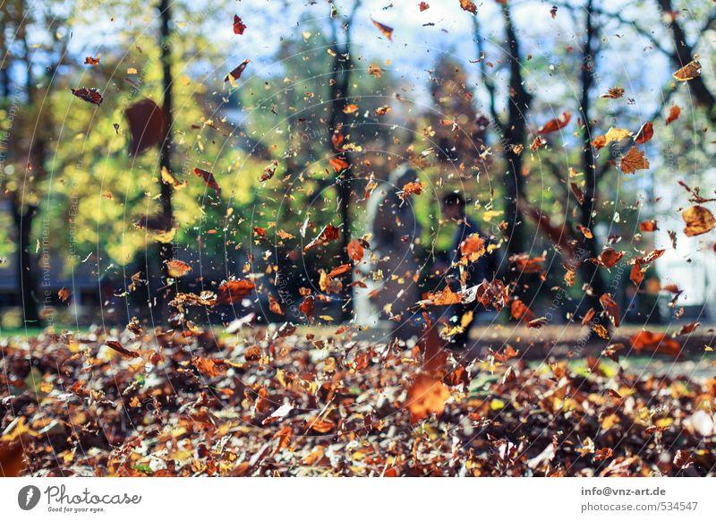 Herbstflug Natur Sonne Baum Blatt Wald gelb Umwelt Garten braun fliegen Park Freizeit & Hobby fallen Schweben herbstlich