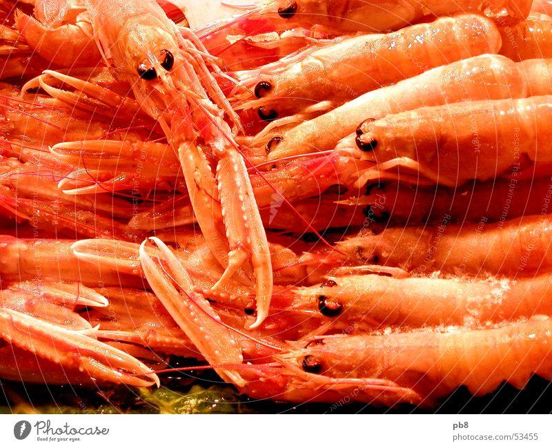 frutti di mare Meeresfrüchte Tier Garnelen Krebstier rot gelb Granele Markt Ernährung orange Fisch Auge mehrere Wasser
